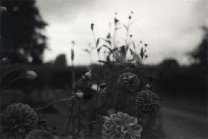 Encore des fleurs.