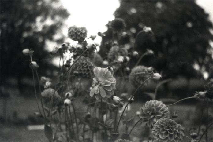 Des... des fleurs.