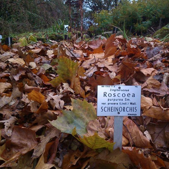 Un vieux tas de feuilles mortes trônant fièrement sur les hauteurs du jardin botanique de Wuppertal