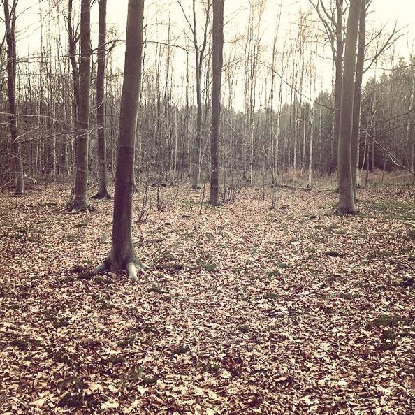 """« Le """"Bois didactique"""" de Courrière. N'y allez jamais, c'est une arnaque ! De la boue, des arbres chiants et c'est tout. C'est le bois le moins didactique du monde. Je n'y ai absolument rien appris. »"""